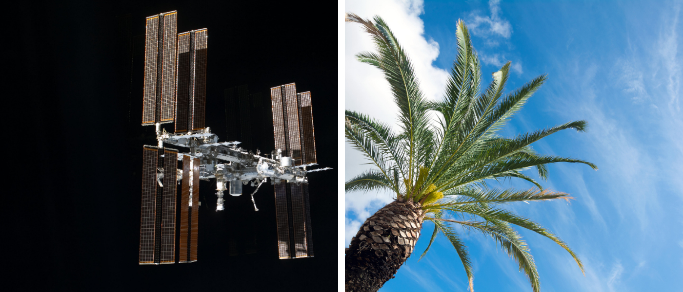 UAE Palm tree space International Space Station ISS