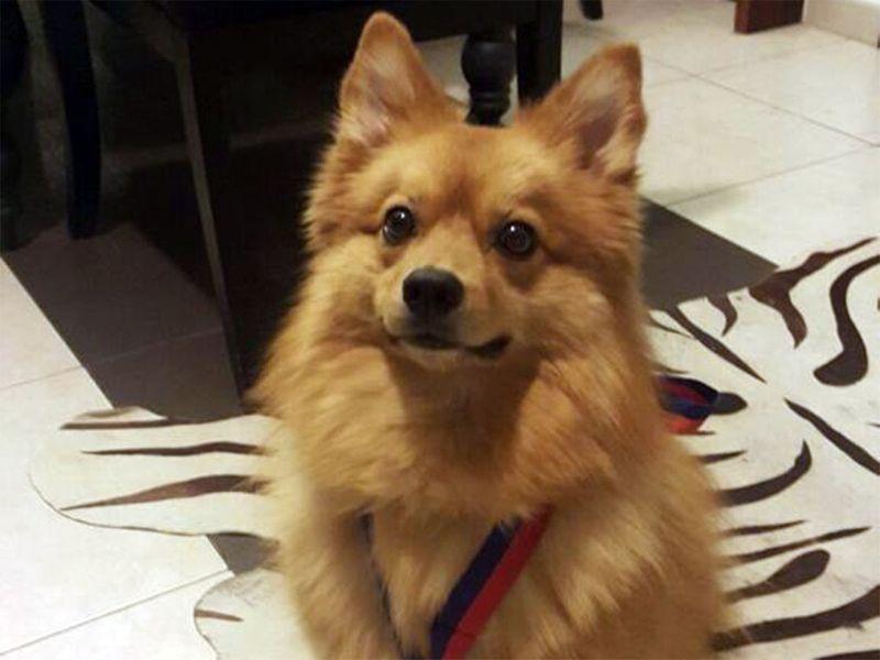 Dubai dog Kaizer saves owner Saeed Al Bayati staircase fall asthma barked