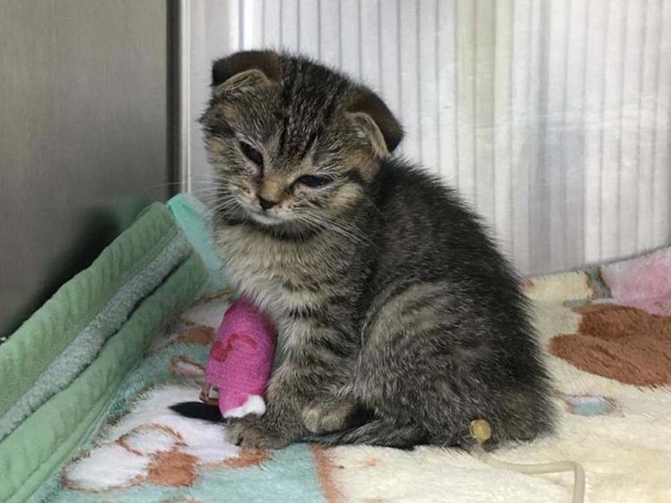 Emmy the miracle kitten survives 20 minutes in a washing machine