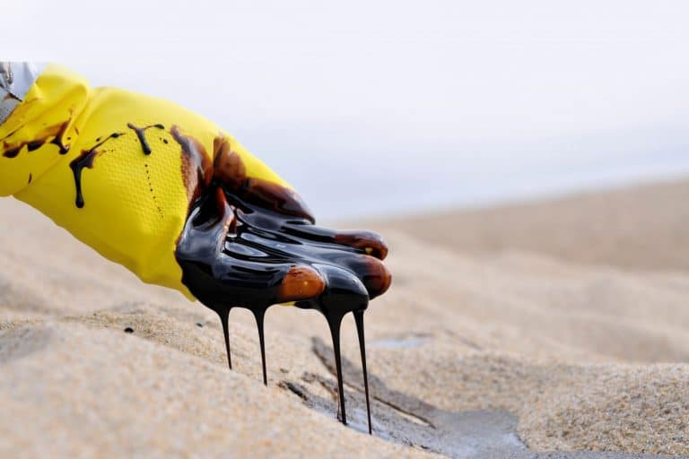Sharjah oil spill takes out wildlife and damages 3km of coastline