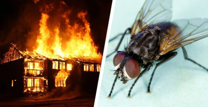 Man blows up part of his house trying to swat fly