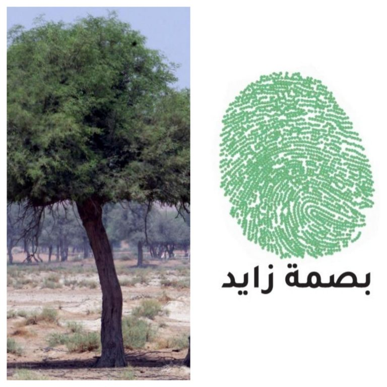 UAE to plant 2,000 ghaf trees in the shape of Sheikh Zayed's fingerprint