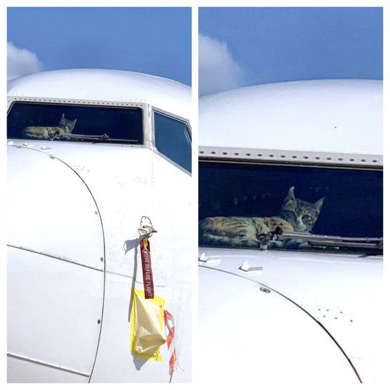 Cat gets stuck in cockpit for two weeks after a flight from Tel Aviv to Dubai