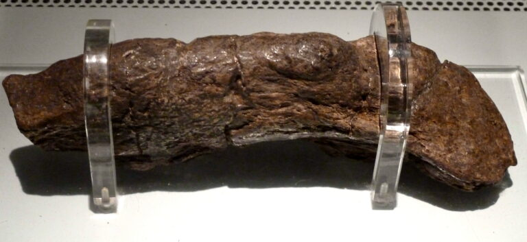 The biggest poo in history is 20cm long and belongs to a 9th Century Viking