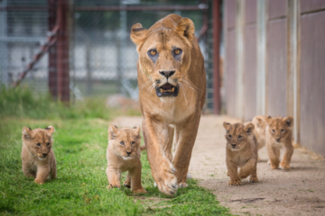 Sharjah to open largest safari park outside Africa