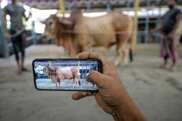 You can now make Eid Al Adha sacrifices via app in