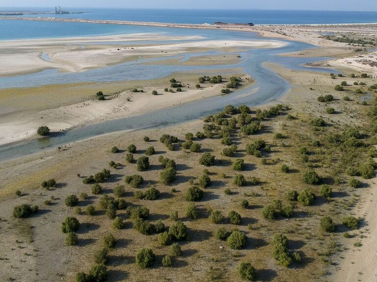 New pictures and videos of the amazing Mangrove Forest in Dubai
