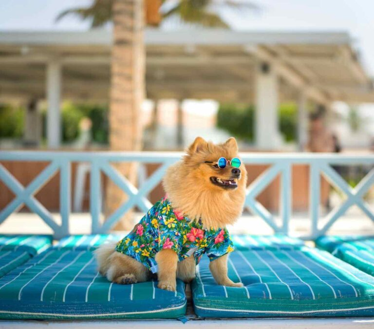 You can now take your pet on a pawsome Dogcation in the UAE