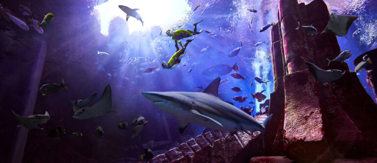 The fin-tastic Shark Week is now on at Atlantis