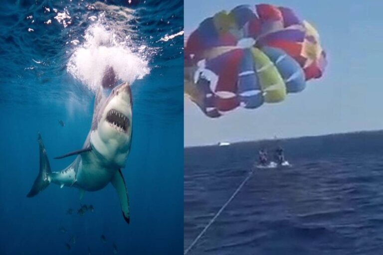 Shark leaps out of water to bite paraglider's foot in the red sea