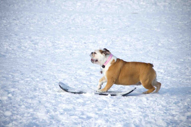 You can now take your dogs for a walk in Ski Dubai